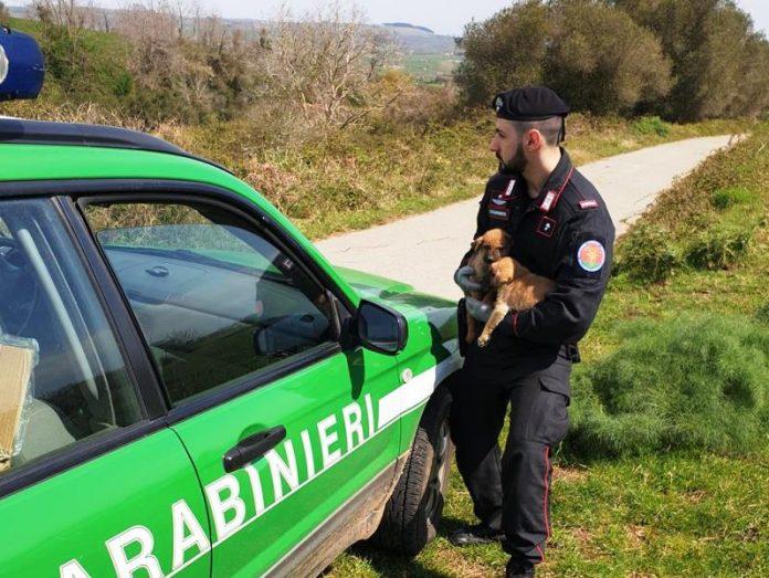 Il salvataggio dei cuccioli