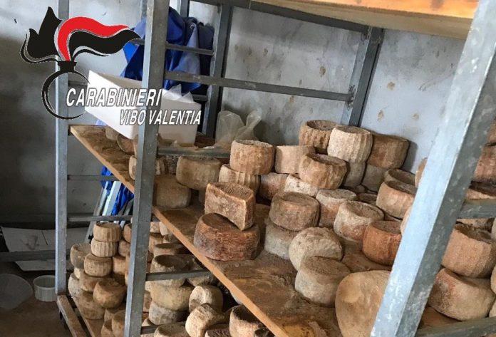 Parte dei formaggi sequestrati a Caroniti