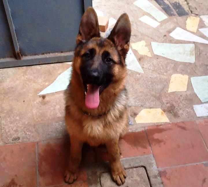 Mileto, due cani morti nel giro di pochi giorni: si sospetta un avvelenamento