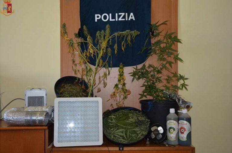 Coltivava canapa dentro casa, un arresto nel Vibonese