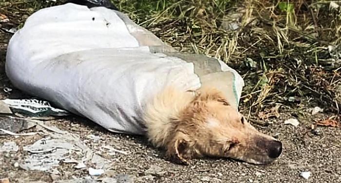 Cane chiuso in un sacco e abbandonato in strada, presentata denuncia contro ignoti