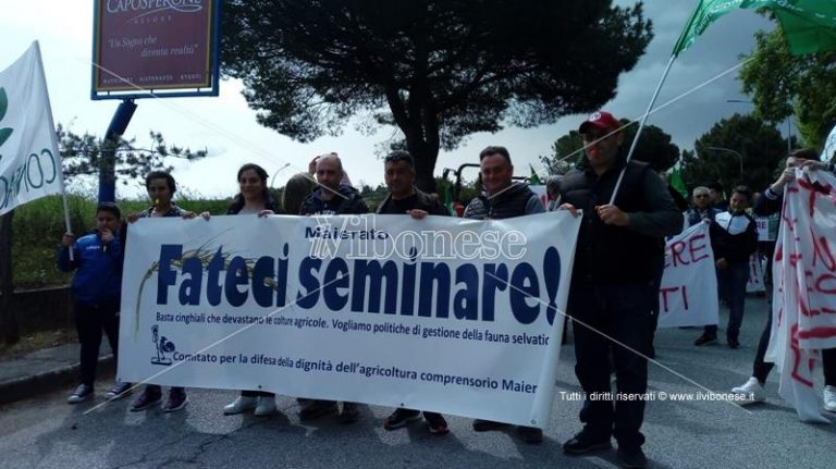 Emergenza cinghiali: agricoltori in piazza a Vibo – Foto