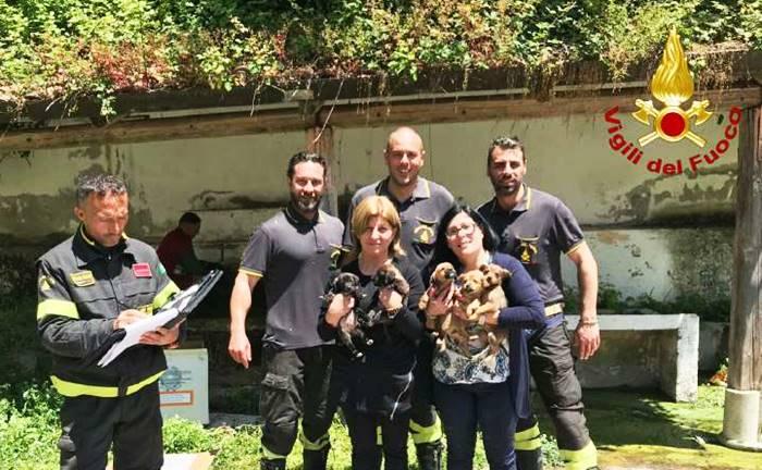Cinque cuccioli abbandonati in un dirupo salvati dai Vigili del fuoco