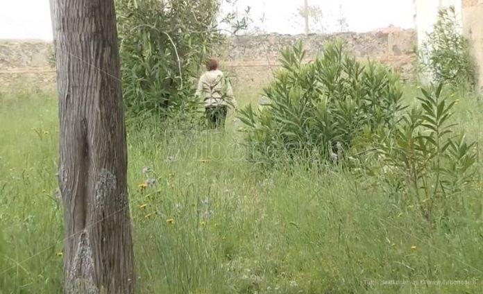 Un'area del cimitero infestata da erbacce