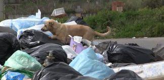 Un randagio tra i rifiuti lasciati per strada