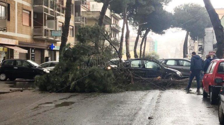 Ramo di un albero finisce su auto in transito: tragedia sfiorata nel centro di Vibo