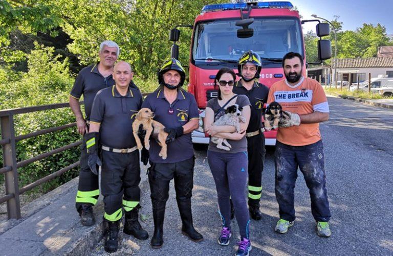 Cagnolini finiscono nel fiume, in tre tratti in salvo a Serra