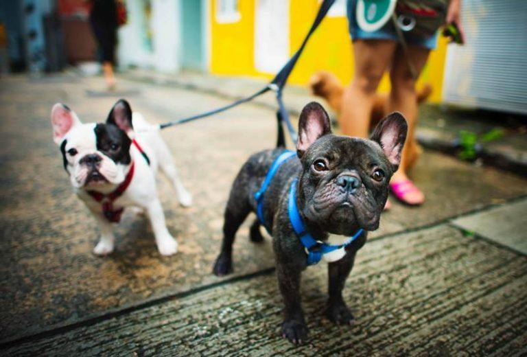 Piazze e ville di Zungri vietate ai cani, l'ordinanza fa infuriare gli animalisti