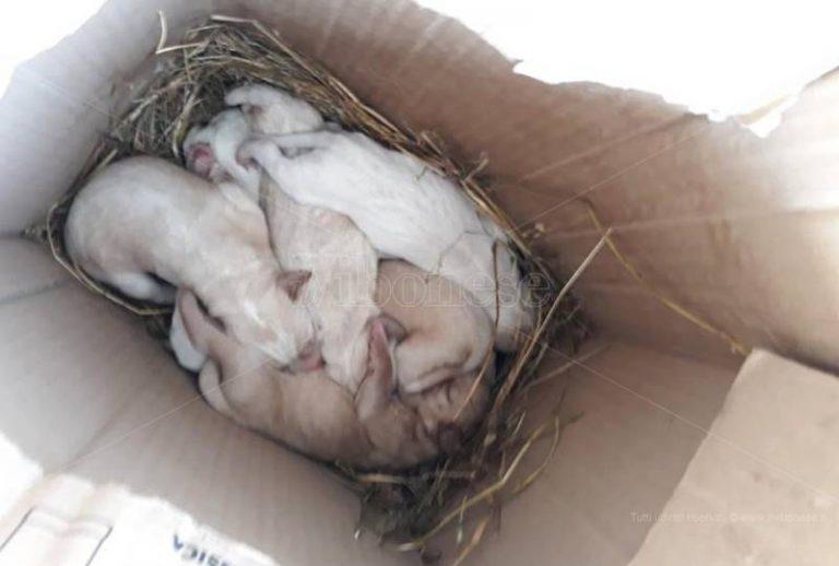 Sette cuccioli abbandonati a Longobardi, l'appello dell'Enpa per trovargli una casa