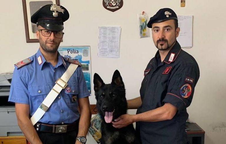 Polia: Enno, il cane carabiniere, scova 120 cartucce di fucile