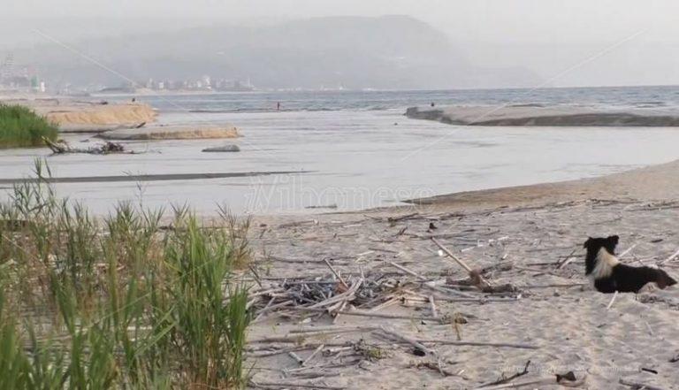 Un'area protetta alla foce del Mesima, pronta la proposta di legge del Wwf