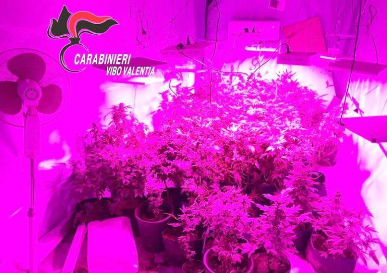 Maxi-piantagione di marijuana scoperta a Monteporo, tre arresti e 20mila piante sequestrate