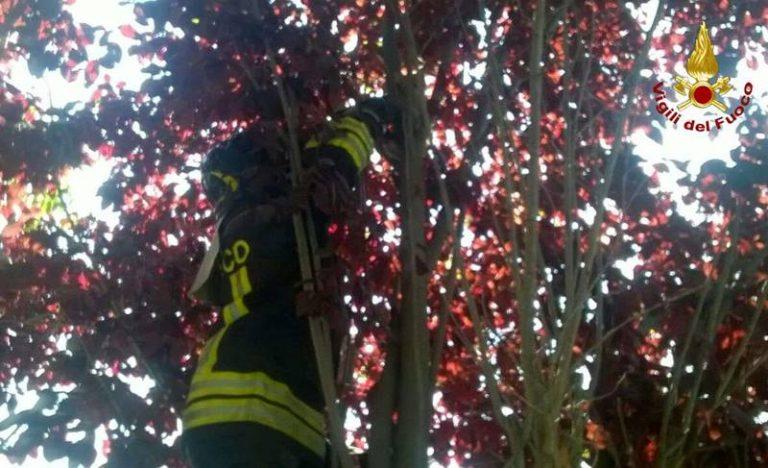 Lieto fine per un gatto bloccato sull'albero: salvato dai Vigili del fuoco e adottato