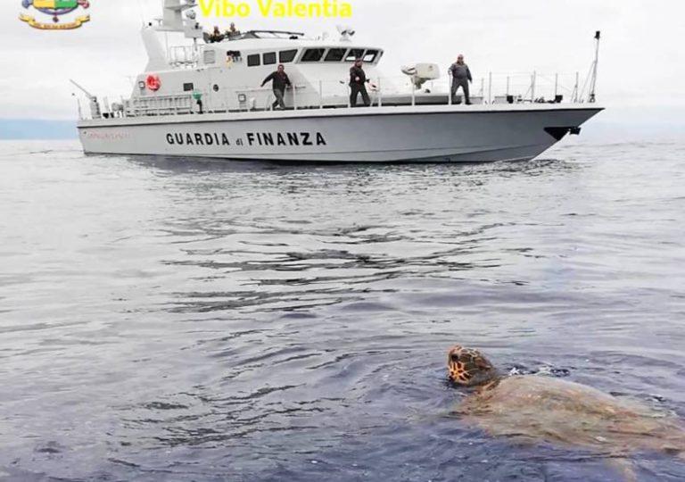 Tartaruga in difficoltà salvata da un'unità navale della Guardia di finanza di Vibo