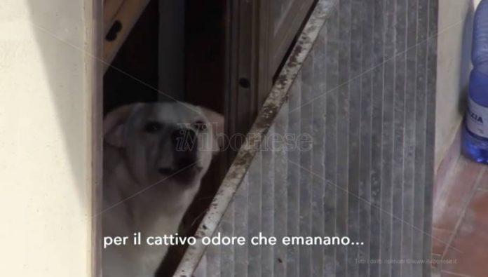 Uno dei cani ospitati nell'appartamento