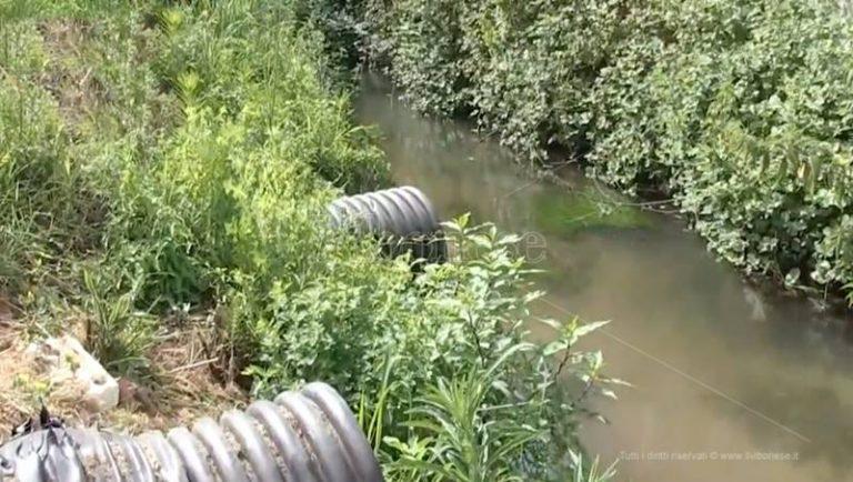 """Inquinamento del Mesima, il Comune di Rosarno """"autorizzato"""" a sversare liquami – Video"""