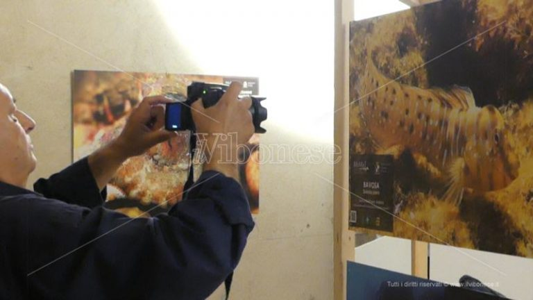 Tropea e la sua biodiversità, inaugurato il Museo del mare – Video