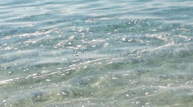 Inquinamento, allarme della Lega Vibo: mare sporco e invaso da rifiuti