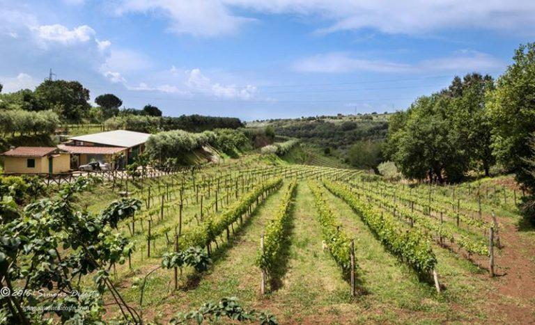 Lo Zibibbo Igp di Cantine Benvenuto entra nella guida Slow Wine 2020