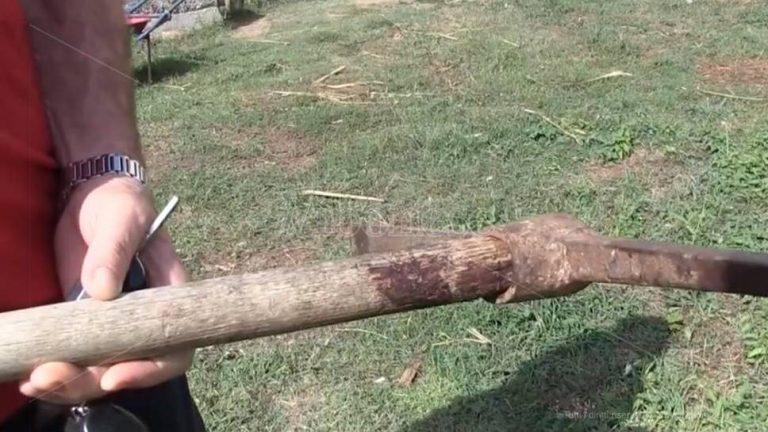 A tu per tu con i cinghiali, il pensionato di Pizzo: «Così sono scampato all'attacco» – Video