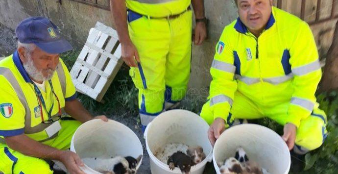 Cuccioli abbandonati sotto un ponte a Pizzo, salvati da personale Anas – Video