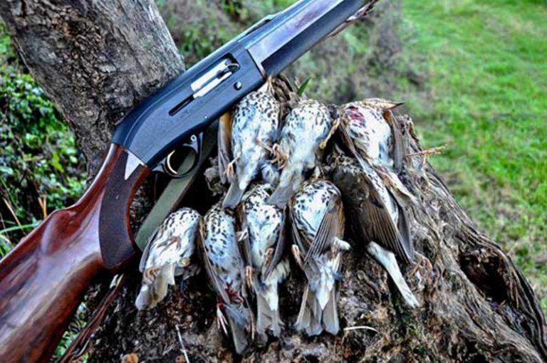 La Regione Calabria si schiera con i cacciatori e non tiene conto del Tar