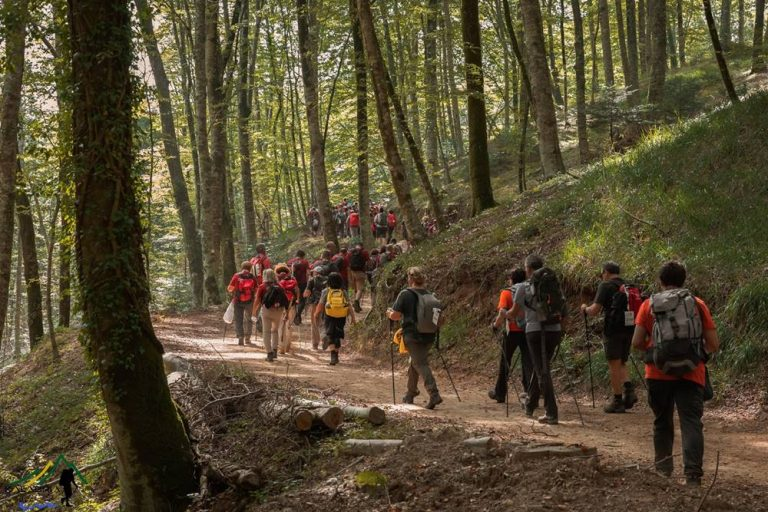 Un parco eolico a monte Coppari: «Previsto l'abbattimento di 2000 faggi»