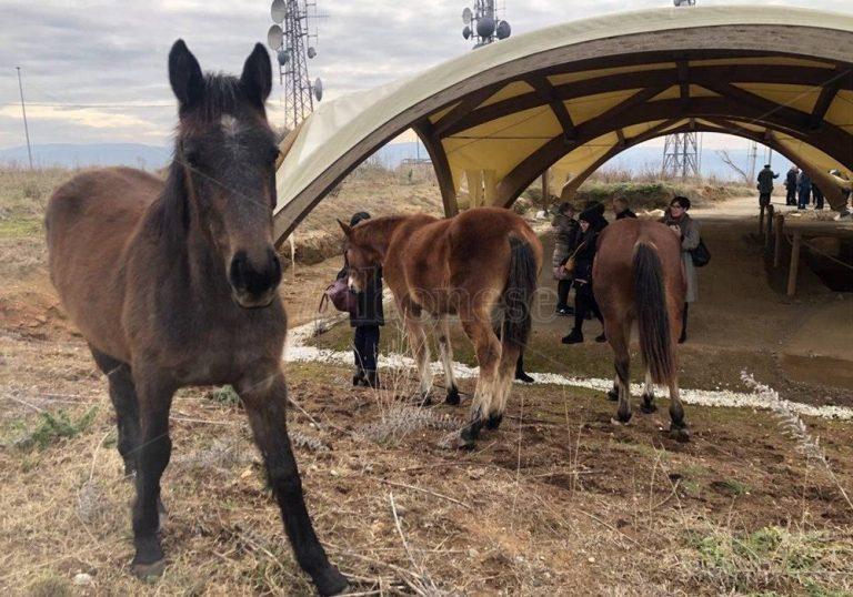 Tempio del Còfino, anche i cavalli (sacri?) nell'area degli scavi – Video