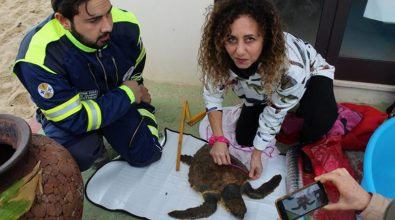 Tartaruga salvata nel mare di Nicotera