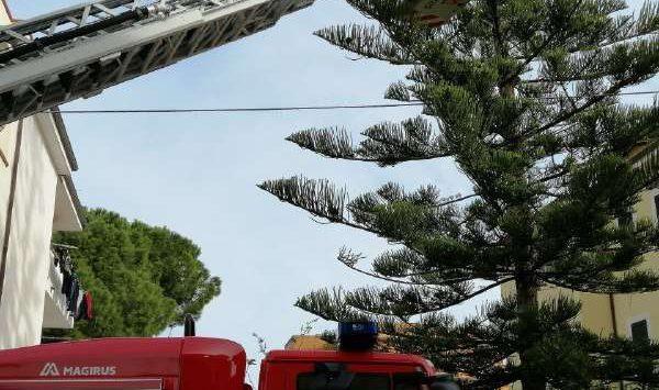 Bloccati su un albero per ore, gattini salvati dai Vigili del fuoco
