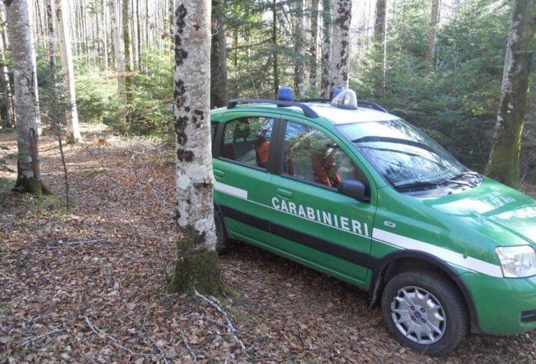 Furto di legna nella riserva Marchesale, denunciato 63enne di Fabrizia