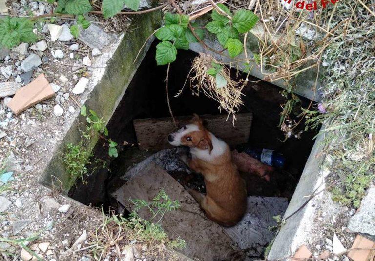 Cucciolo cade in un pozzetto a Vibo, recuperato dai vigili del fuoco