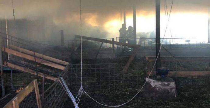 Stalla in fiamme a Motta Filocastro, animali salvati dai Vigili del fuoco – Foto