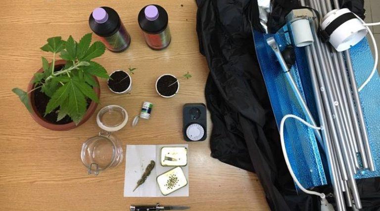 Coltivazione di marijuana e porto di coltello, assolto 30enne di Briatico