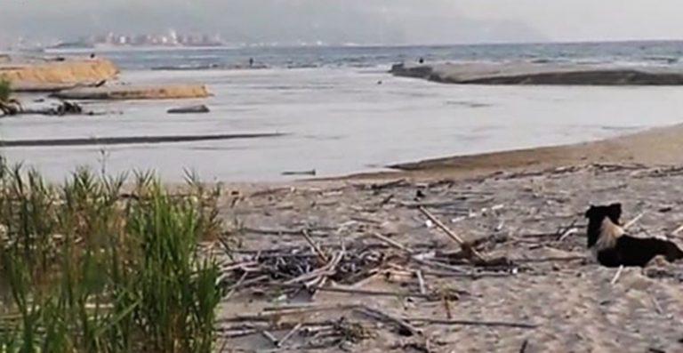 Mare inquinato nei pressi del fiume Mesima, ancora un divieto