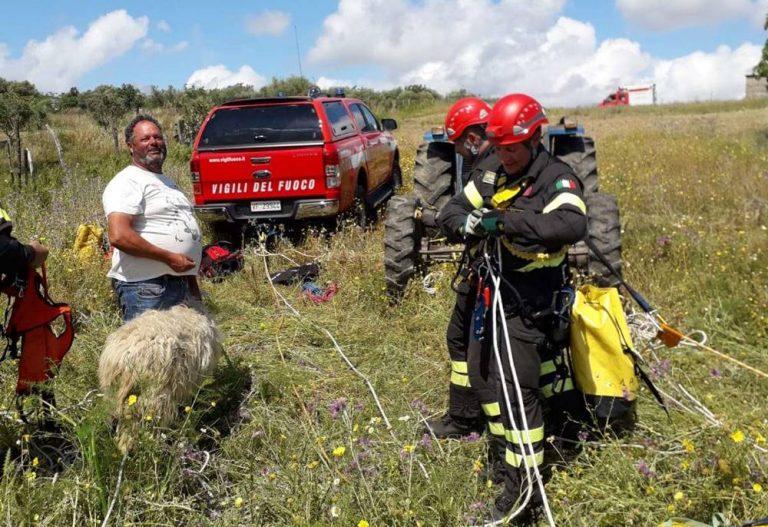 Pecora precipita in un dirupo a Zungri, salvata dai Vigili del fuoco