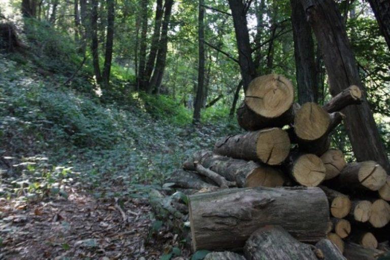 """""""Imponimento"""": gli affari dei boschi, la spartizione e lo strappo tra i boss"""