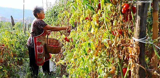 Viaggio nelle campagne del vibonese con LaC Storie per raccontare la tradizionale preparazione della salsa