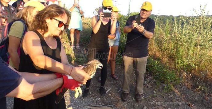 Ricadi, Legambiente rimette in libertà due rapaci sul torrente Ruffa – Video