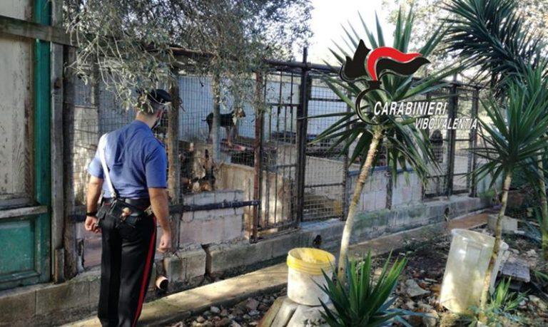 Canile abusivo scoperto dai carabinieri a Sant'Onofrio