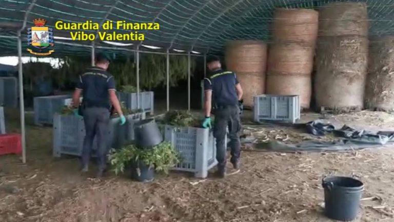 Pizzo, sequestrati sei quintali di marijuana: la Gdf esegue cinque arresti – Nomi/Foto/Video
