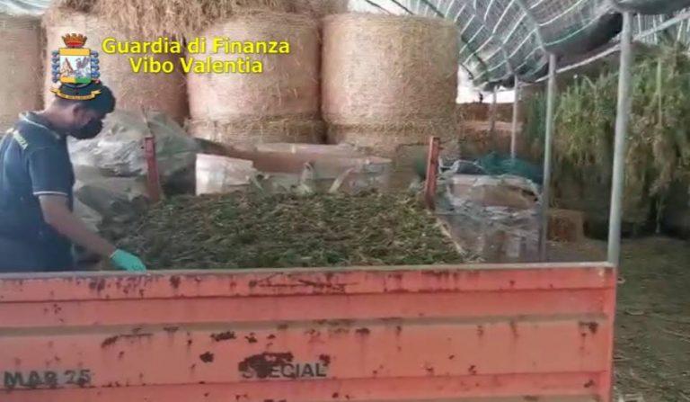 Marijuana nel vivaio dei Santacroce a Pizzo: arresti convalidati