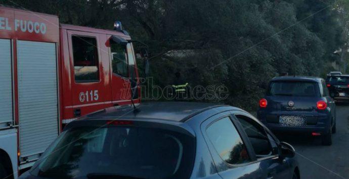 Cede un ulivo secolare, tragedia sfiorata tra Stefanaconi e Sant'Onofrio – Foto