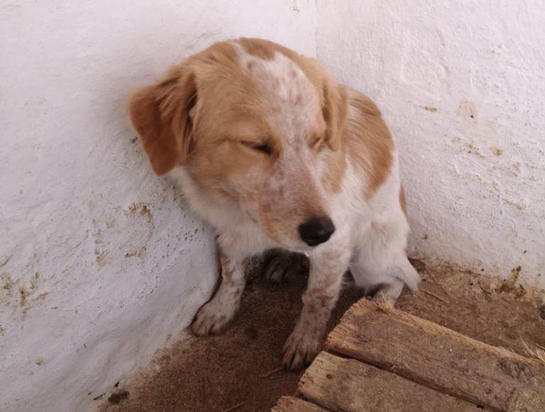 Cagnolino legato con una corda ad un masso salvato a Paravati