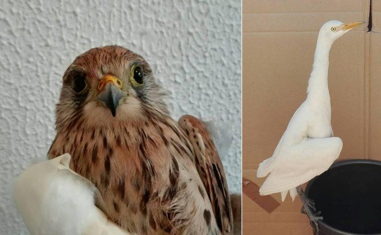 Animali da salvare, nel Vibonese recuperati esemplari di diverse specie