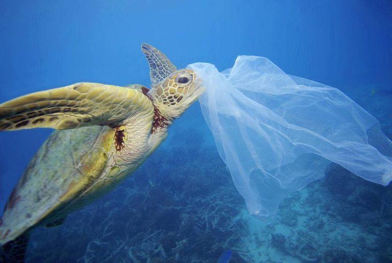 La battaglia contro le plastiche in mare fa proseliti nel Vibonese