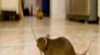 Tropea, «Scuola chiusa per Covid» …ma è solo un topo