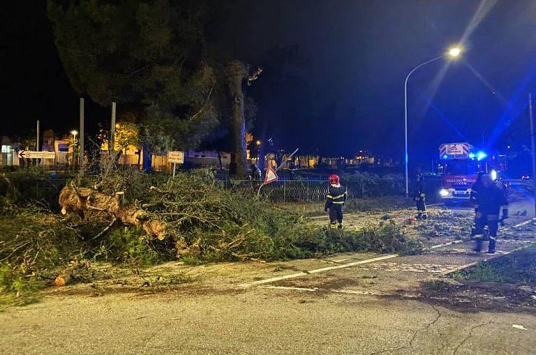 Crolla un pino all'ingresso di Vibo, il sindaco: «Abbattimenti necessari» – Foto