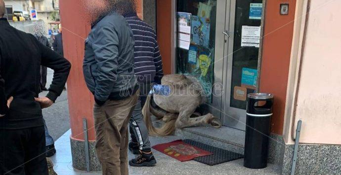 San Calogero, notizie confortanti sulle condizioni del 17enne sbalzato da cavallo