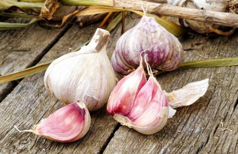 L'aglio di Papaglionti, eccellenza vibonese dalle innumerevoli proprietà